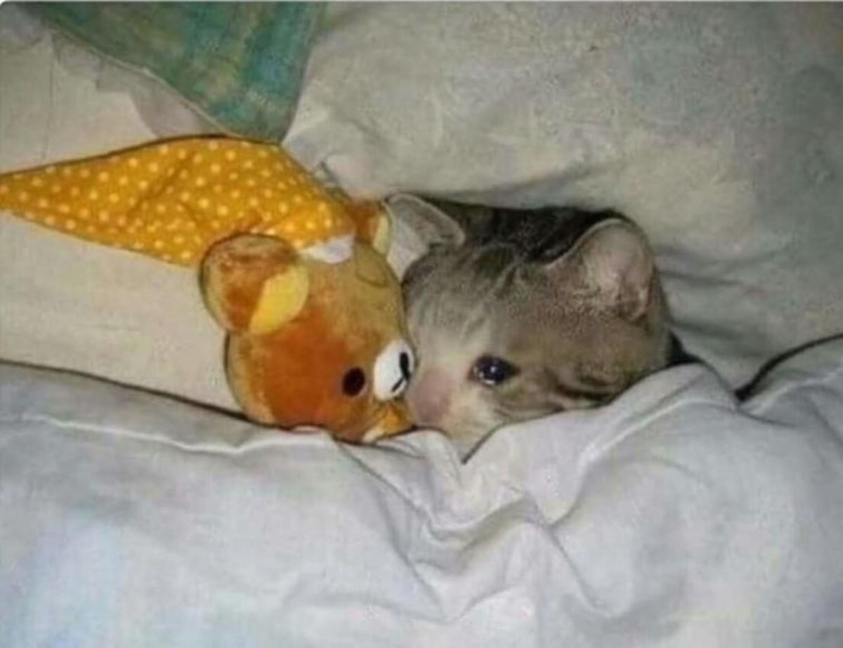 Sad+cats_c27c35_6536312.jpg