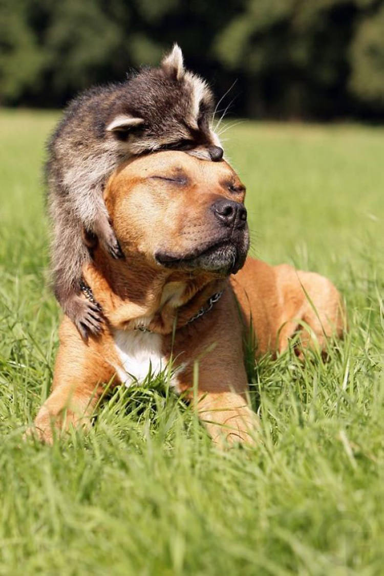 raccons-being-adorable-1.jpg
