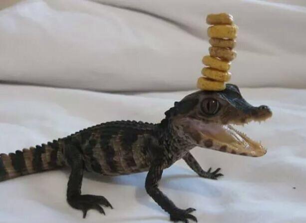 cute crocodile.jpg