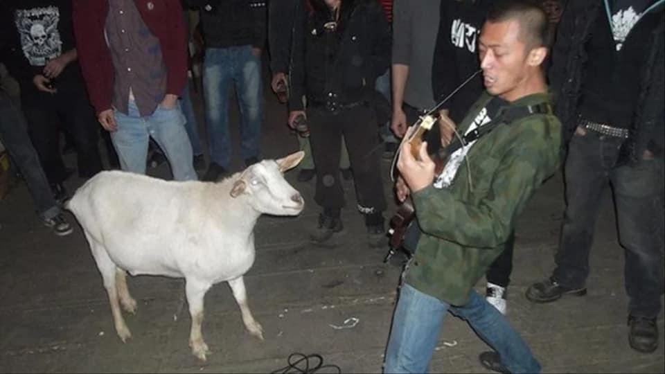party goat.jpg