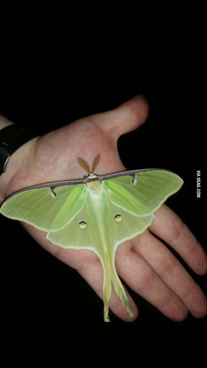 cute moth5.jpg