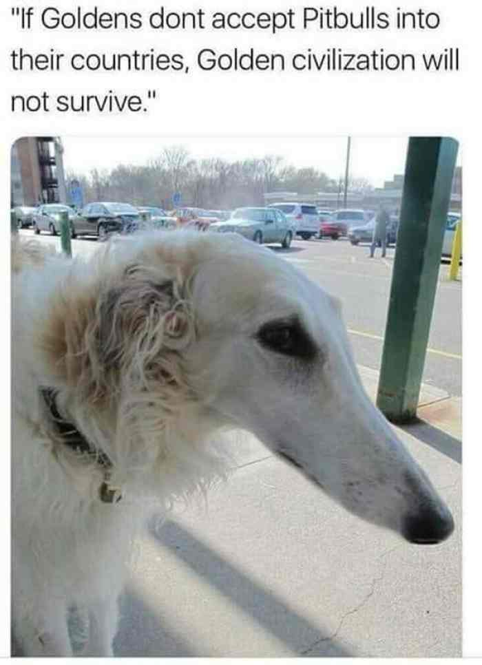 l-26875-if-goldens-dont-accept-pitbulls-into-their-countries-golden-civilization-will-not-survive.jpg