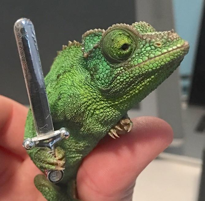 chameleon with lego sword.jpg