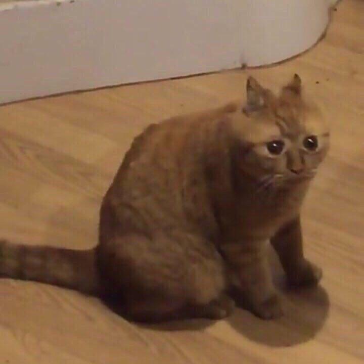 concerned kitter.jpg