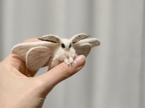 cute moth.jpg