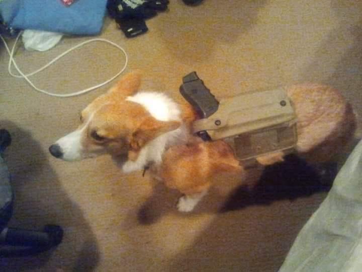 tactical corgy.jpg