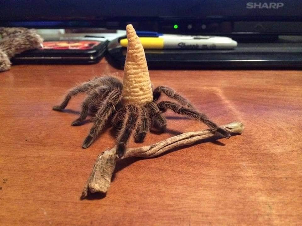 bugle spider.jpg
