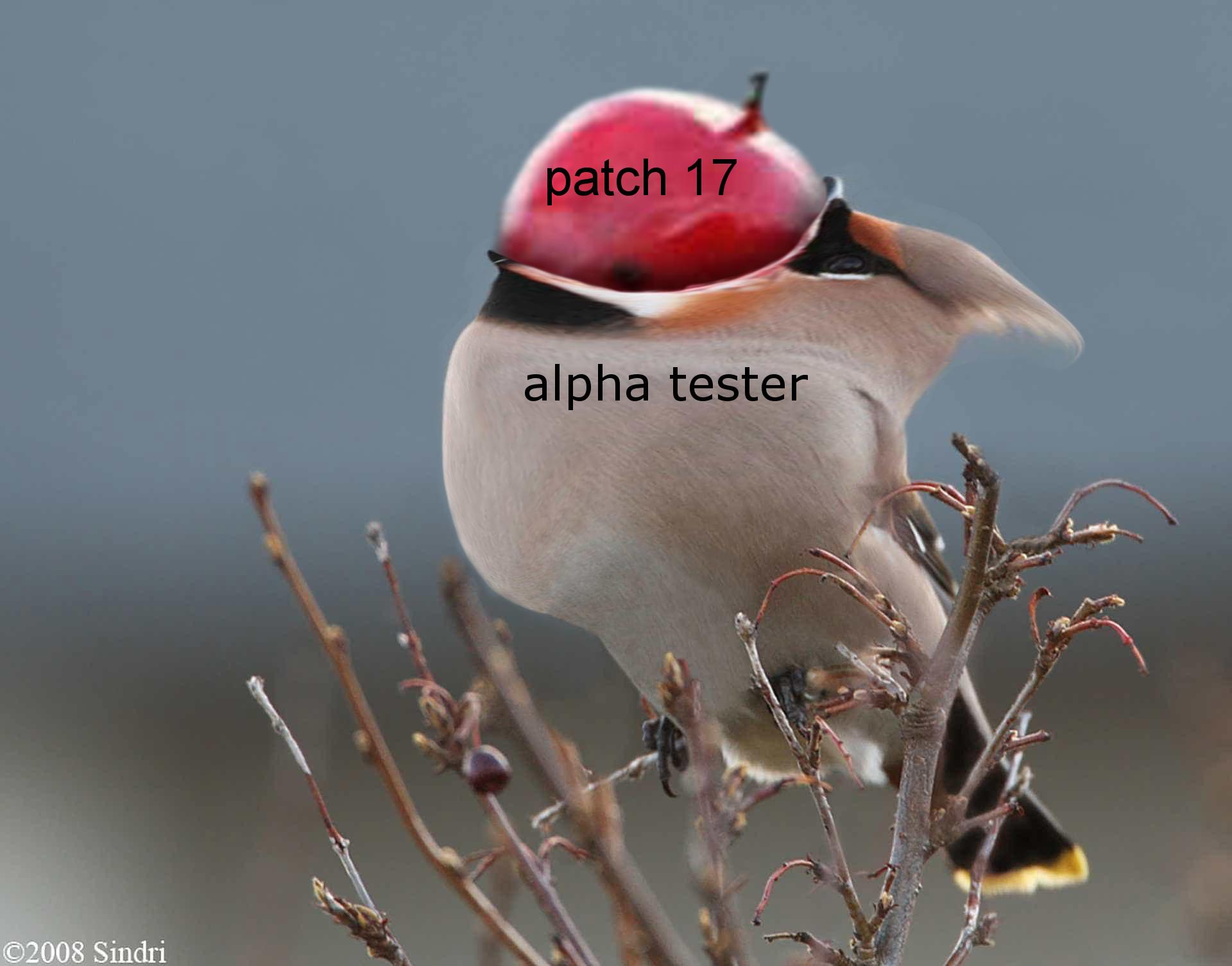 patch17.jpg