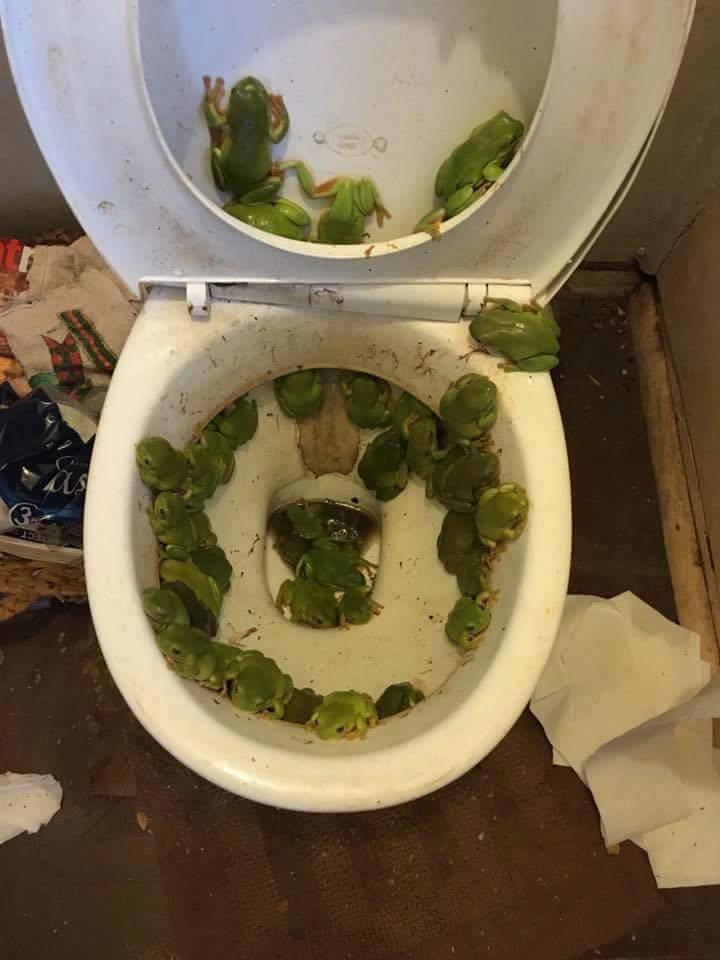 shitters_frogged.jpg