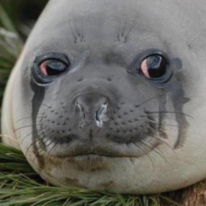Crying seal.jpg
